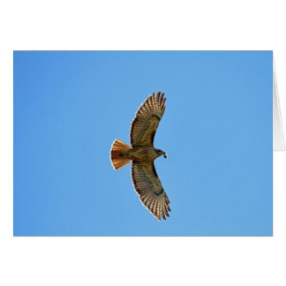 Red-Tailed Hawk Photo Card