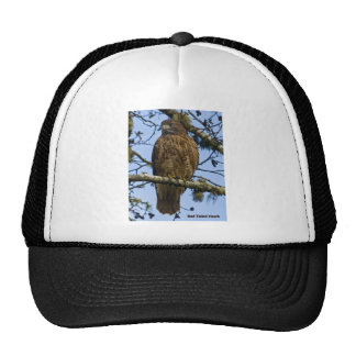 Red Tailed Hawk Photo Trucker Hats