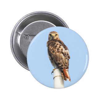 Red-tailed Hawk Pin