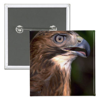 Red tailed hawk pinback button