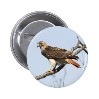Red-tailed Hawk Pinback Buttons