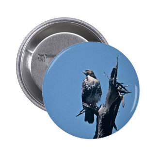 Red-tailed Hawk Pins