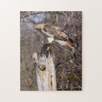 Red-tailed Hawk Puzzles