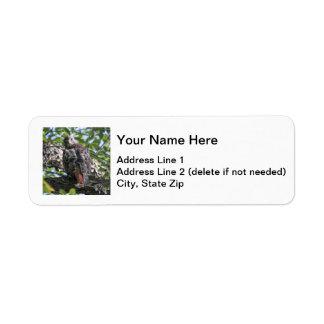 Red-tailed Hawk Return Address Label