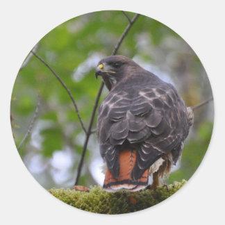 Red-Tailed Hawk Round Sticker