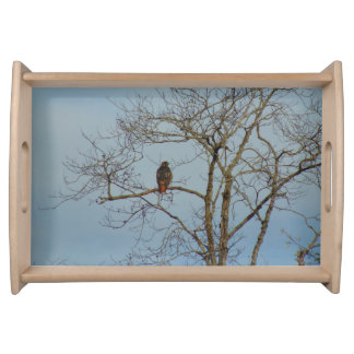 Red Tailed Hawk Serving Tray