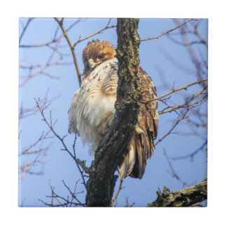 Red-tailed Hawk Small Square Tile