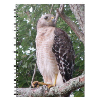 Red Tailed Hawk Spiral Photo Notebook