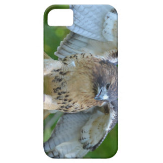 Red-tailed Hawk Spread Wings iPhone 5 Cover