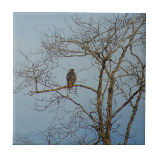 Red Tailed Hawk Tile