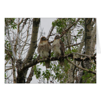 Red-Tailed Hawks Greeting Card