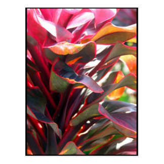 Red Ti Leaves Postcard