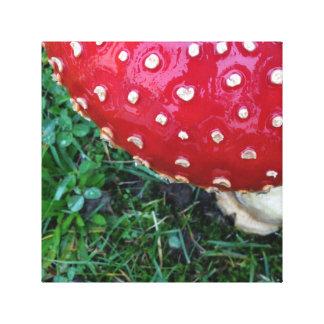 Red Toadstool Mushroom Canvas