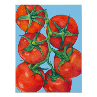 Red Tomatoes blue Poster