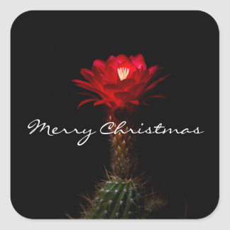 Red torch cactus flower, Merry Christmas Square Sticker
