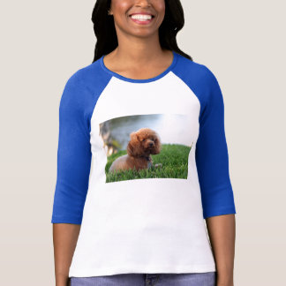 Red Toy Poodle Shirt