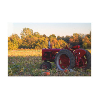 Red tractor in a field of pumpkins canvas print