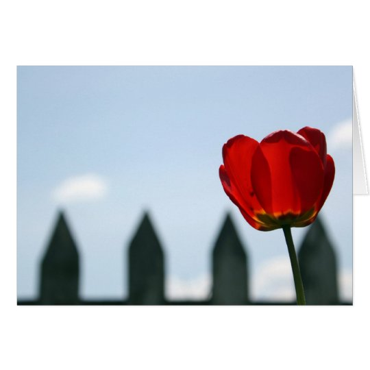 Red Tulip Card