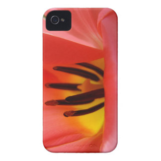 Red Tulip Flower Blackberry BOLD phont cases iPhone 4 Case-Mate Case