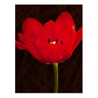 Red Tulip Flower Colorful Floral Stem Postcard