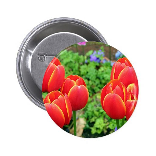 Red tulip flowers in bloom 1 pinback buttons