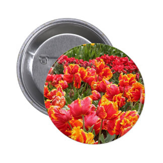 Red tulip flowers in bloom 2 pin