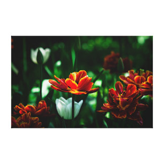 Red Tulip - His Majesty the King Stretched Canvas Prints