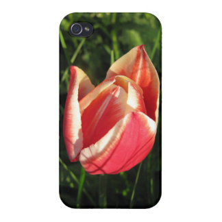 Red Tulip Iphone4 Case Cover Cover For iPhone 4