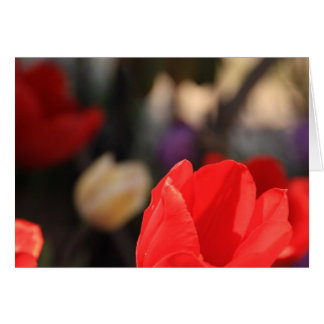 Red Tulip Note Card