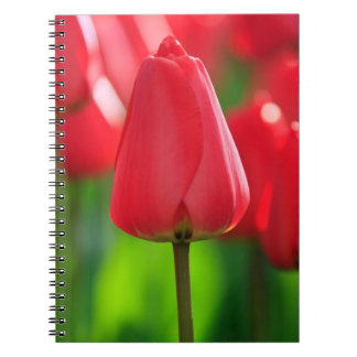 Red Tulip Notebooks