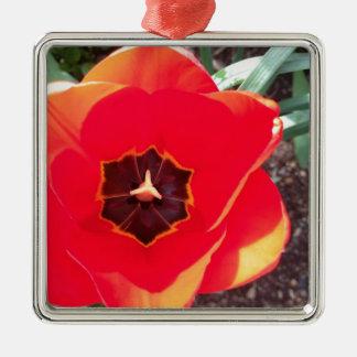 Red tulip Silver-Colored square decoration