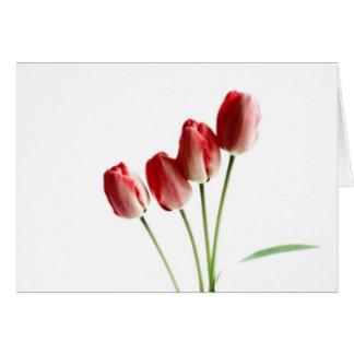 Red tulips blank greetings card