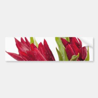 Red tulips bouquet bumper sticker