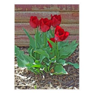 Red Tulips Flowers Petals Bloom by SD Kelley Postcard