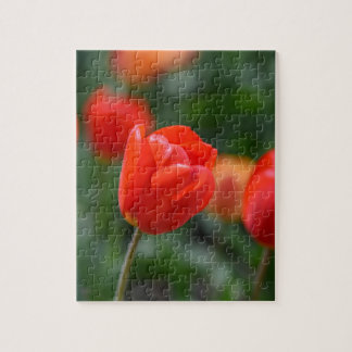 Red Tulips in the Garden Jigsaw Puzzle