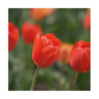 Red Tulips in the Garden Wood Wall Decor