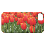 Red Tulips iPhone 5 Case