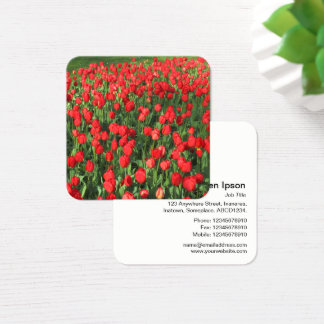 Red Tulips Square Business Card