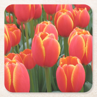 Red tulips square paper coaster