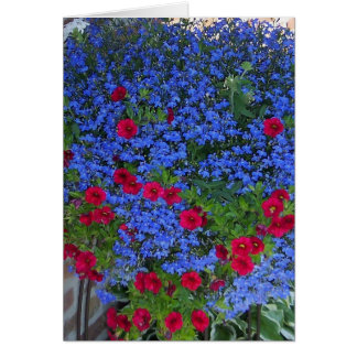 Red, White & Blue beauty Card