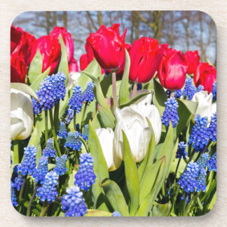 Red white blue flowers in spring season drink coaster