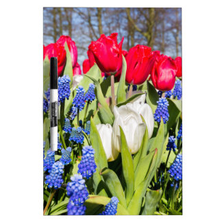 Red white blue flowers in spring season dry erase board