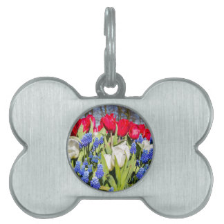 Red white blue flowers in spring season pet tag