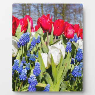 Red white blue flowers in spring season plaque