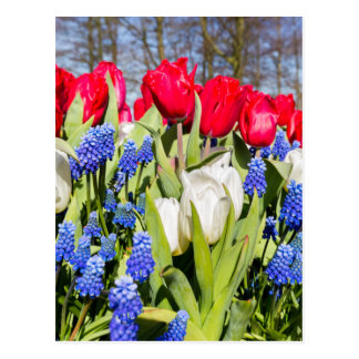 Red white blue flowers in spring season postcard
