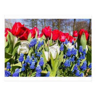 Red white blue flowers in spring season postcard