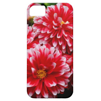 Red & White Dahlias Barely There iPhone 5 Case