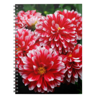 Red & White Dahlias Notebooks