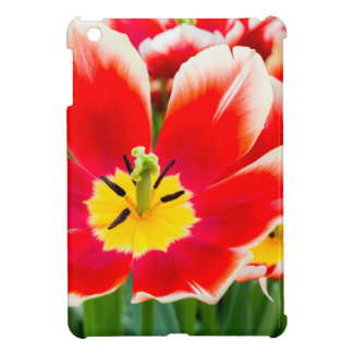 Red white tulip in field of tulips case for the iPad mini