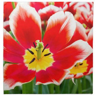 Red white tulip in field of tulips napkin